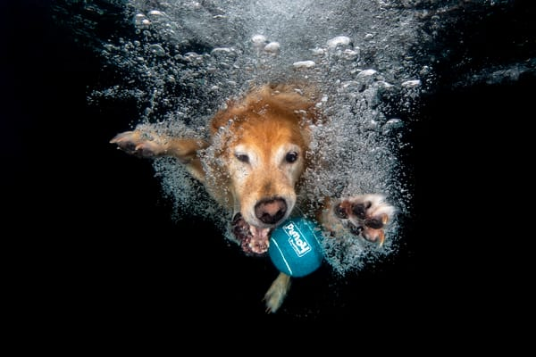 Toby With Blue Ball Underwater 83 A9391 Dover Fl Usa Photography Art   Clemens Vanderwerf Photography