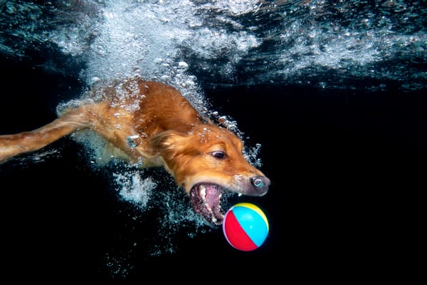 Zevon With Beach Ball Underwater 83 A9233 Dover Fl Usa Photography Art   Clemens Vanderwerf Photography