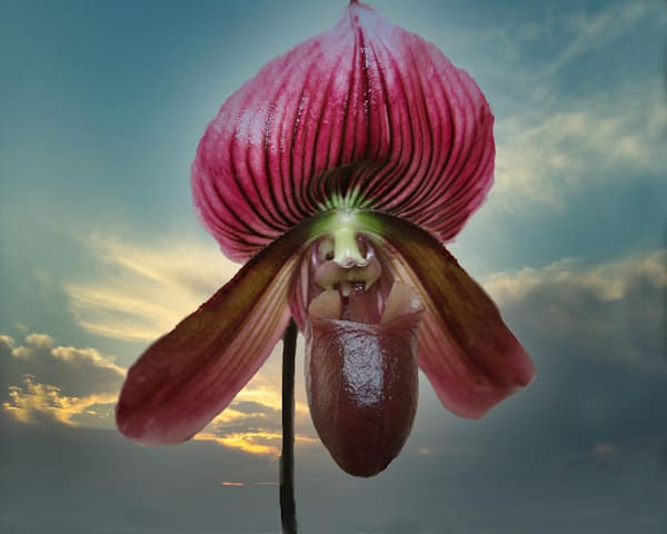 Lady Slipper Orchid   Sky Photography Art   It's Your World - Enjoy!