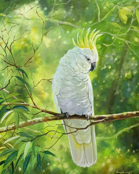 Sulphur-crested Cockatoo - Green and Gold