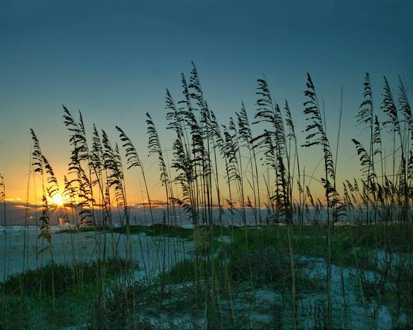 Sunset Through Sea Oats Photography Art | It's Your World - Enjoy!