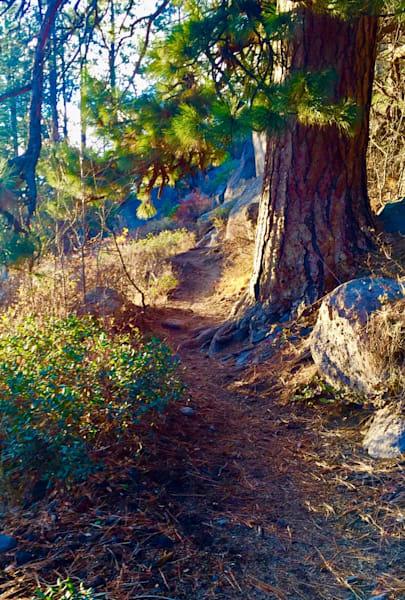 Meadow Camp Afternoon Art | Scott Dyer Fine Art