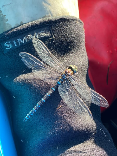 Dragonfly On Waders Photography Art   Visionary Adventures, LLC