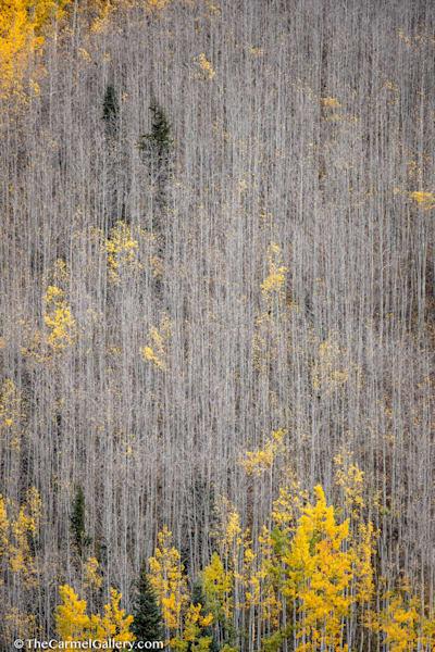 Gossamer Forest I Art | The Carmel Gallery