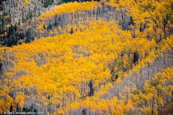 Aspen Symphony Art | The Carmel Gallery
