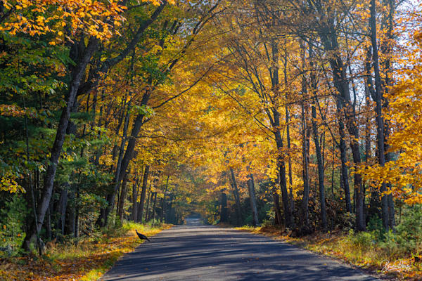 Autumn Road Trip in the North Woods