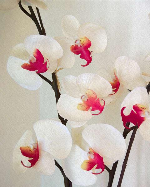 Orchid Fresco