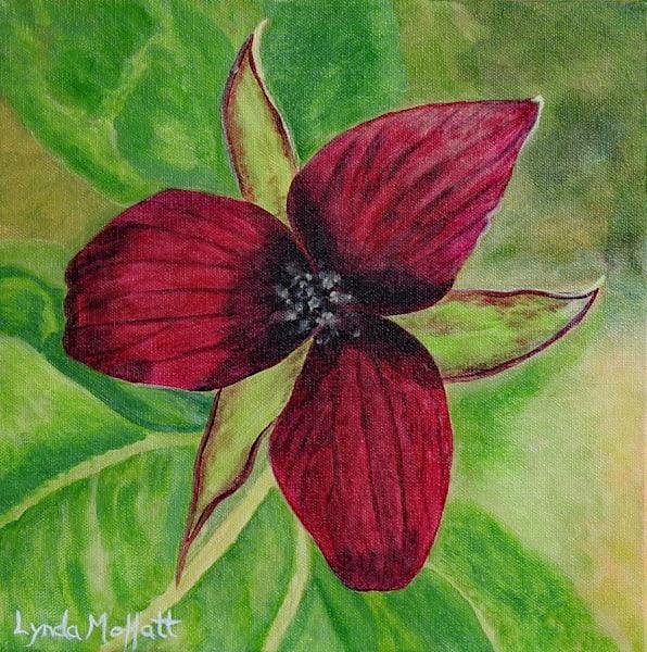 Algonquin Red Trillium Art | Lynda Moffatt Fine Arts