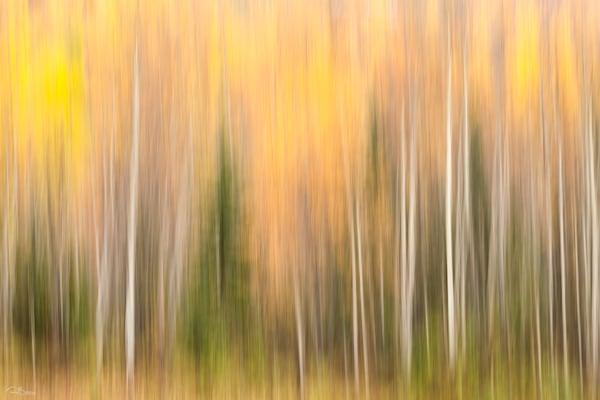 Autumn colors impressionistic photo.
