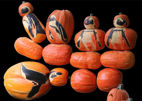 Zoo Penguin Pumpkins Chp 168 1002 Art | Drawn To Nature