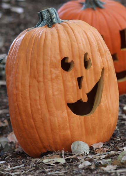Zoo Pumpkin Cvp 168 1001 Art | Drawn To Nature