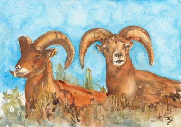 Sleeping Rams  Art | Debra Bruner Studio
