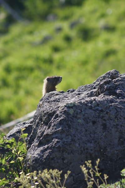 Peek A Boo Squirrel Photography Art | Happy Hogtor Photography