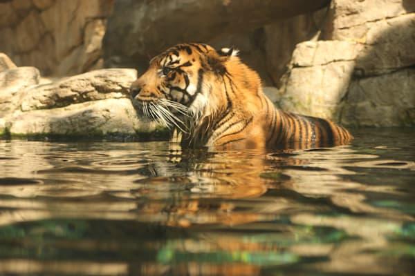 Cat Bath Photography Art | Happy Hogtor Photography