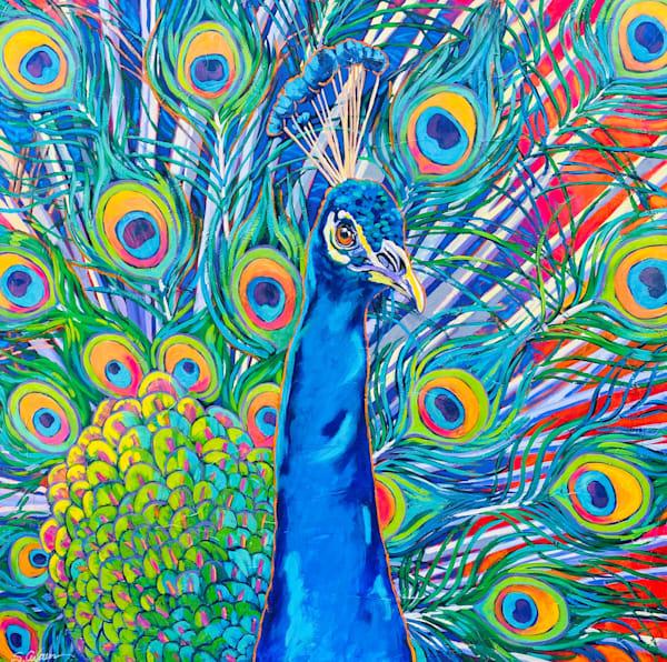 Proud Peacock Art | Sally C. Evans Fine Art