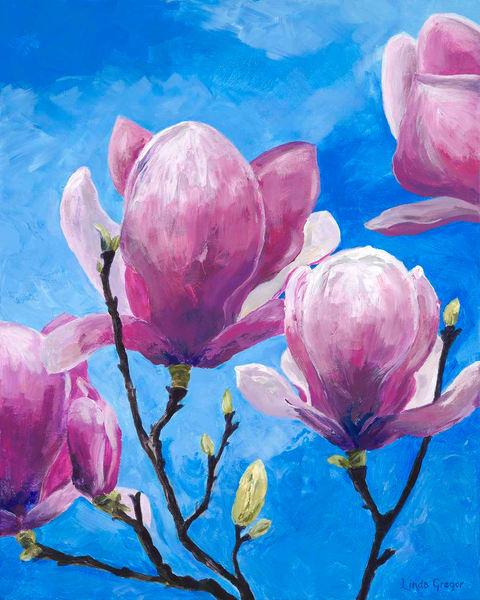 Magnolias in Spring sunshine