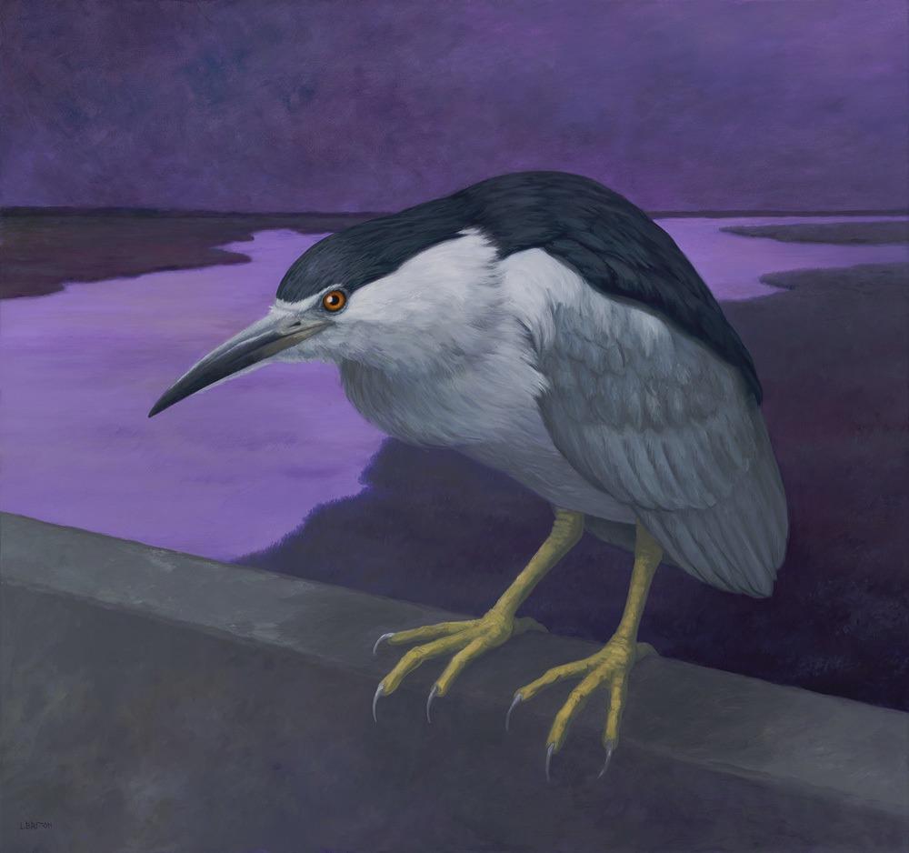 Britton-Night-Heron-wnzm7f