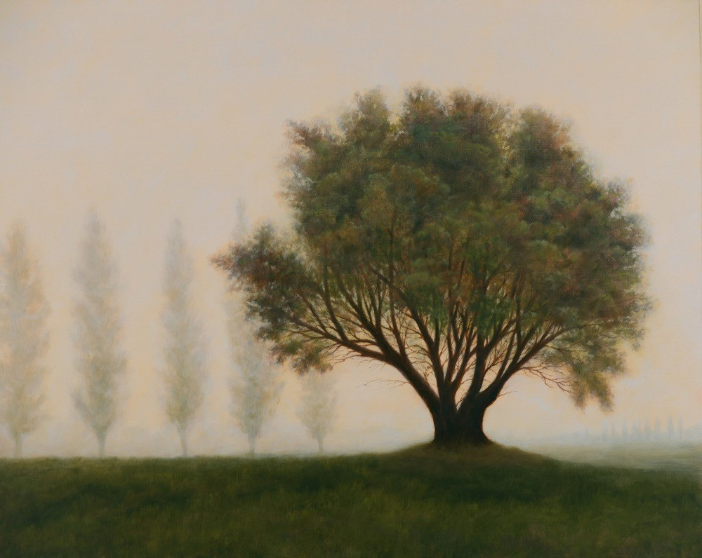Gedye-Madrona-and-Cypress-in-Morning-Fog-1000-wz4eor