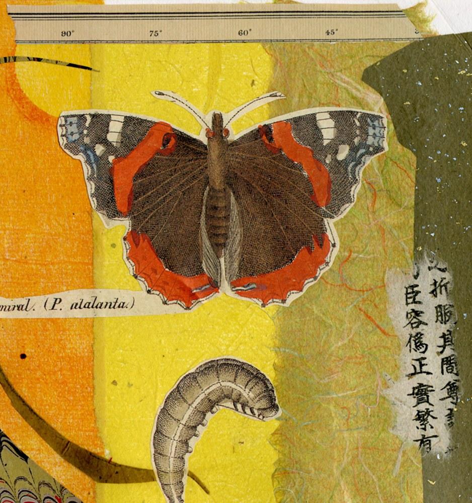 butterflies-and-bugs003-tn-jfj22d