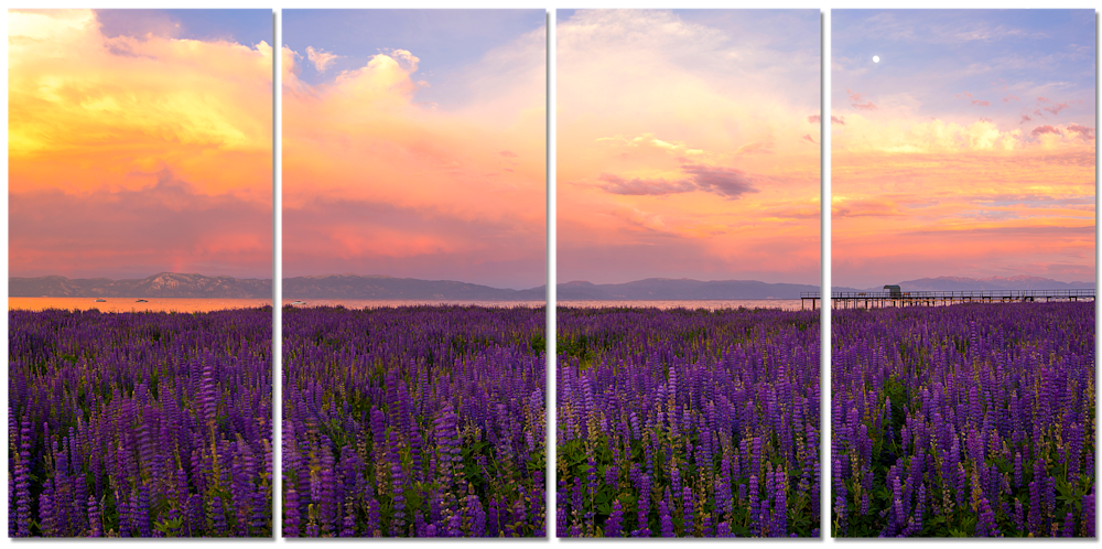 Tahoe-City-Lupines-Sunset-80x40-4-piece-canvas-art-wall-qgnyax