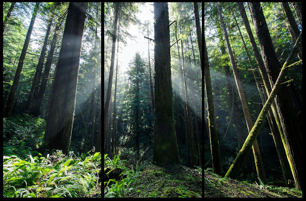 Enchanted-Forest-3-Piece-Canvas-ceqcnc