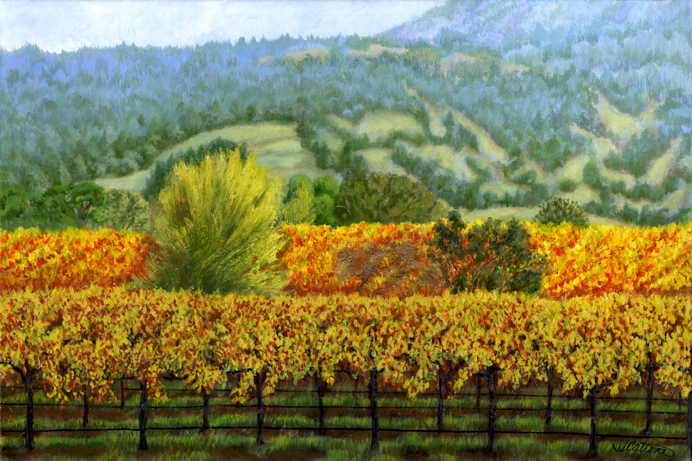 Sonoma-vineyard-original-fkmhmv