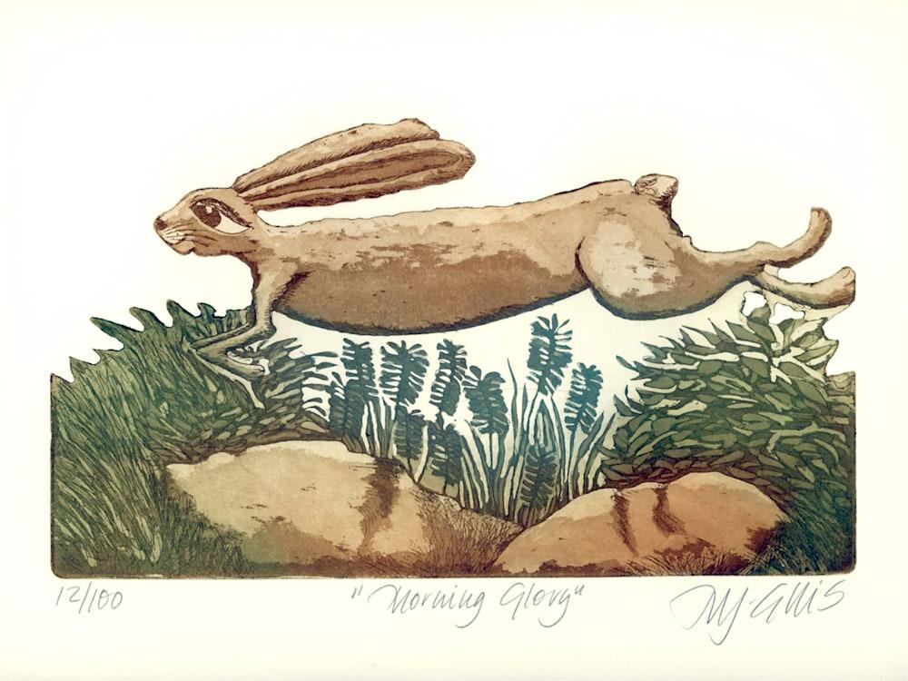 hare morning glory