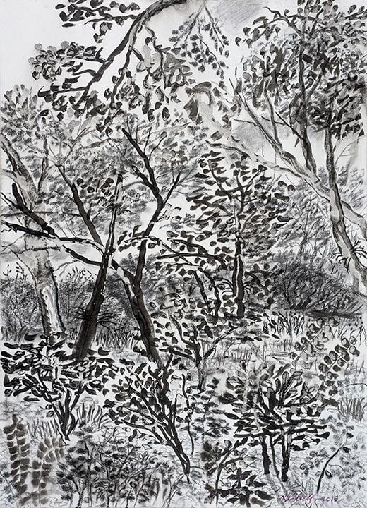 My Backyard Series12 ink charcoal drawing