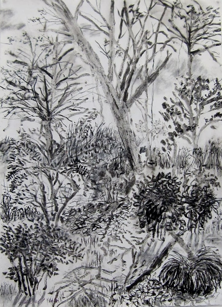 My Backyard Series8 ink charcoal drawing