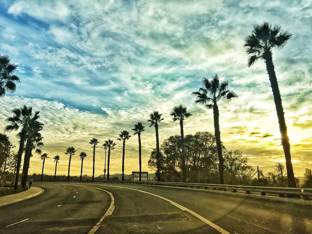 Esco Palm Trees 2017 rsz