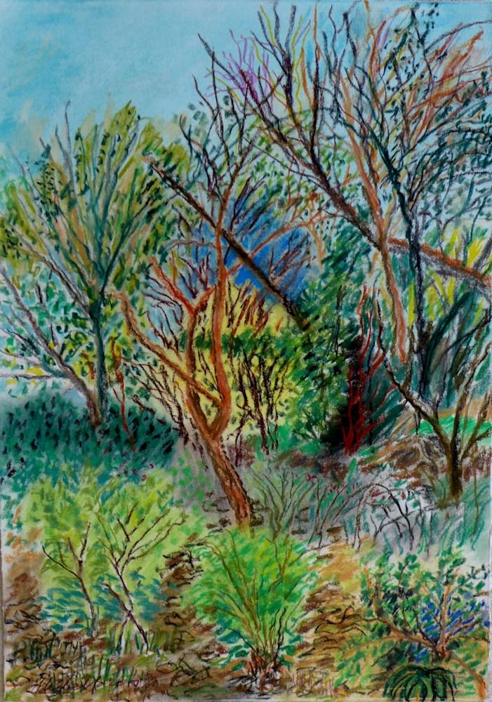 My Backyard Series landscapes