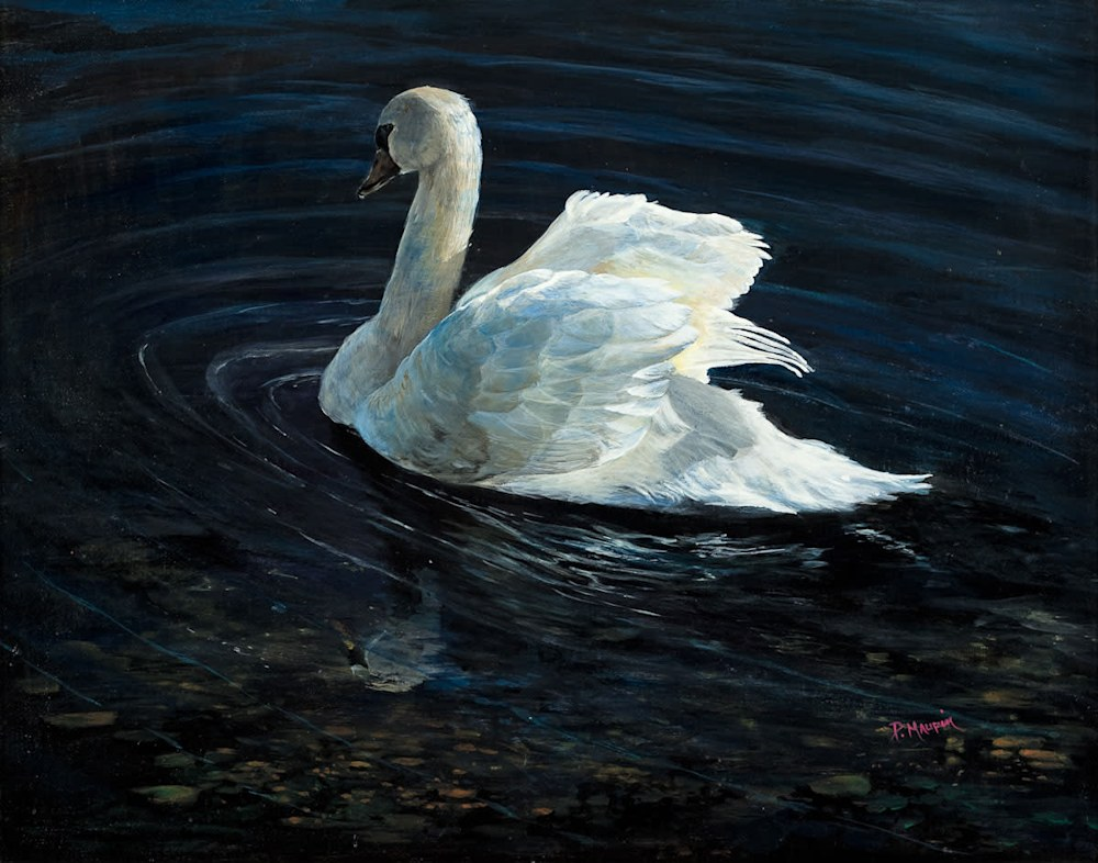 Swan lores