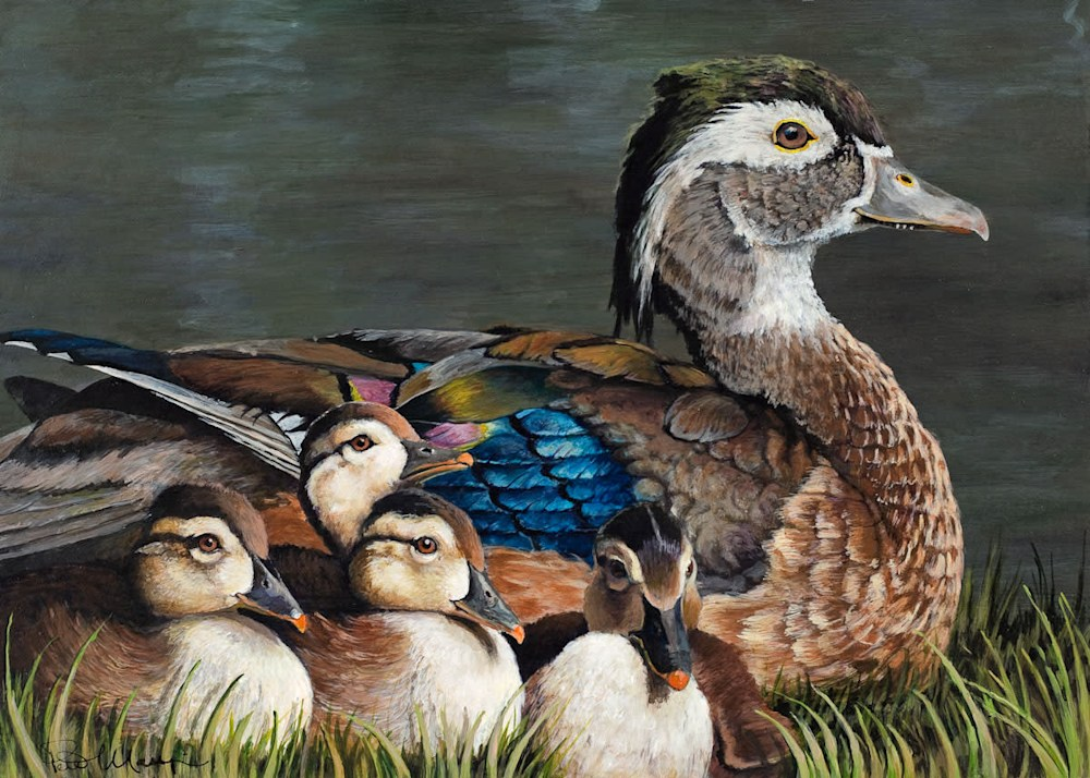 Wood Duck with Chicks lores