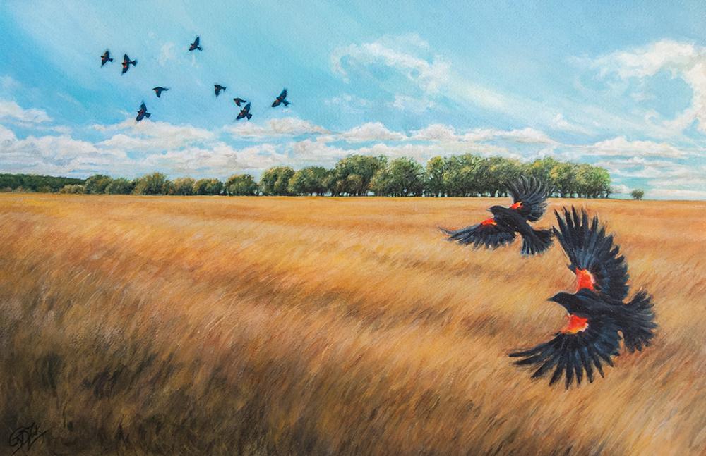 ZookOriginal BlackbirdFlyIntoTheNight 11x17