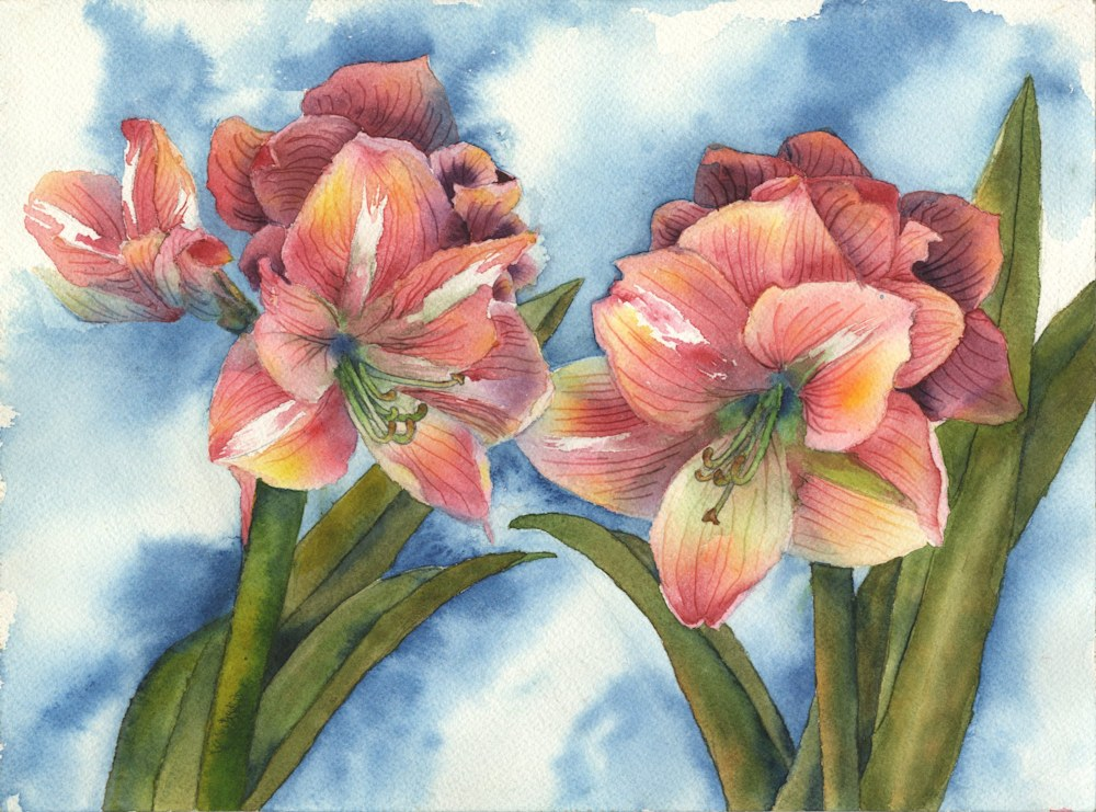 Breezy Pink Amaryllis, pink floral painting, pink amaryllis, floral painting, floral watercolor