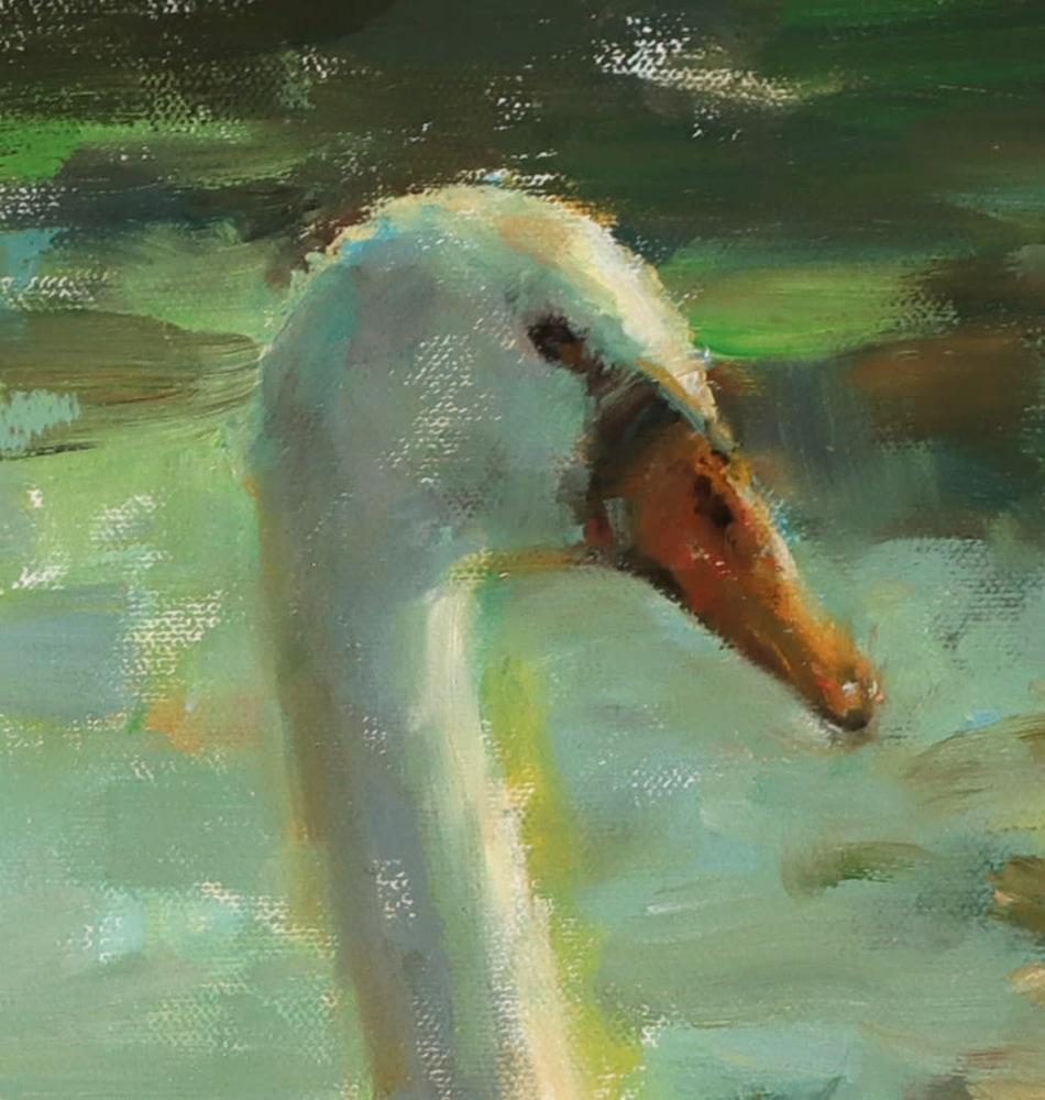 close up swan head