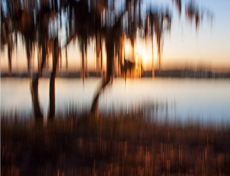 palm tree sunset coa