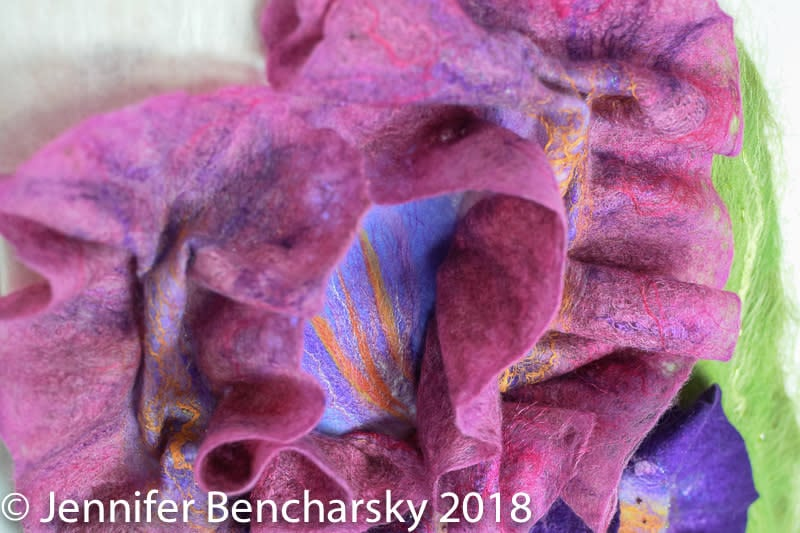 Bearded Iris 6