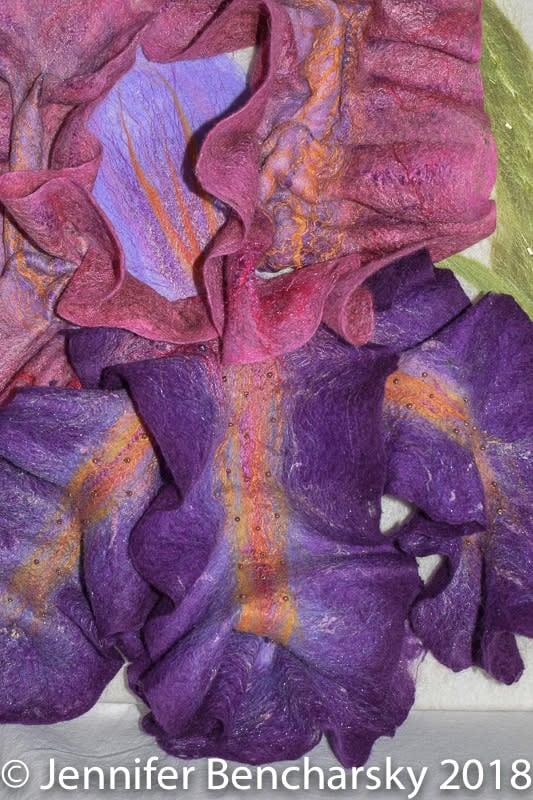 Bearded Iris 8