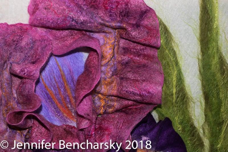 Bearded Iris 3