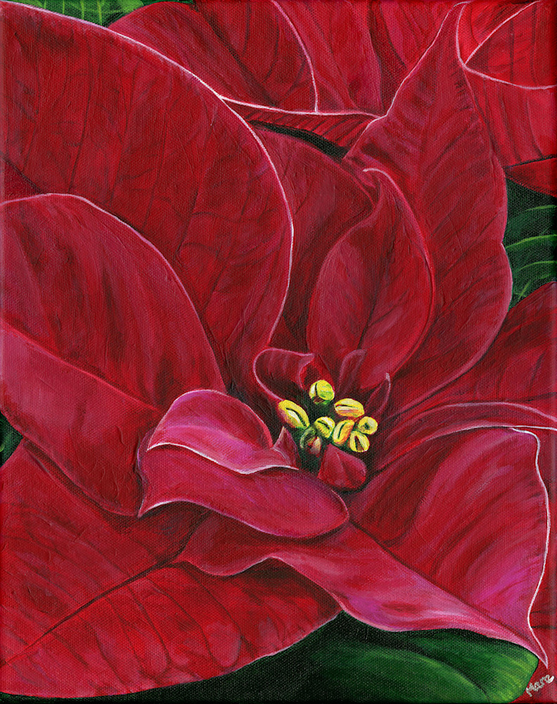 Poinsettia Passion 400