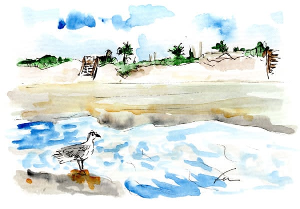 seagullandsteps