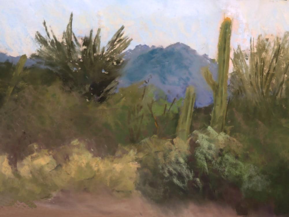 Old Tucson Saguaros