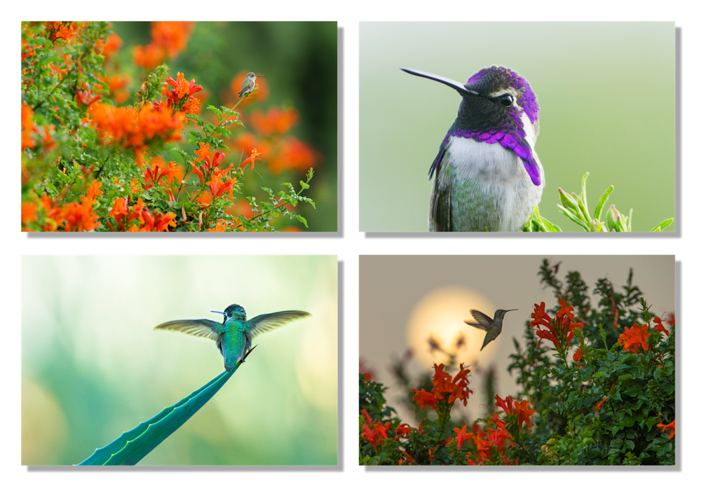 Sunnylands Hummingbirds