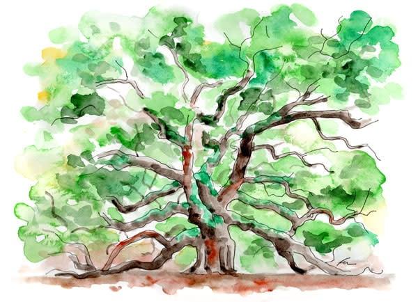 Angel Oak Watercolor