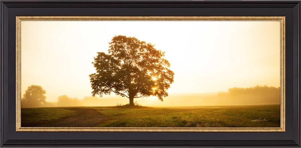Golden Morning Light WEB SE