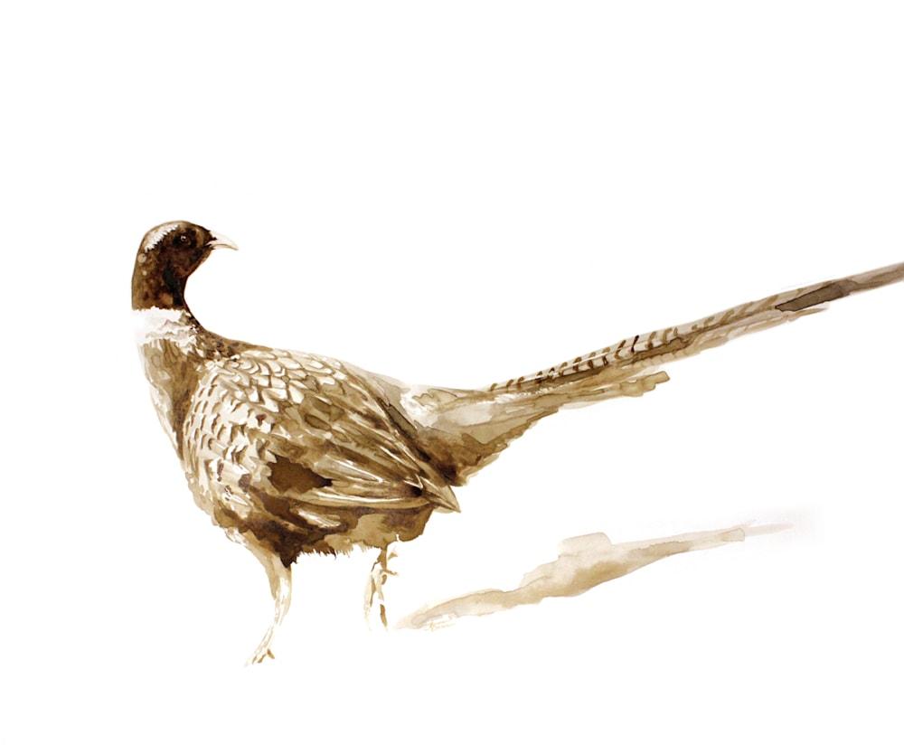 SK Pheasant