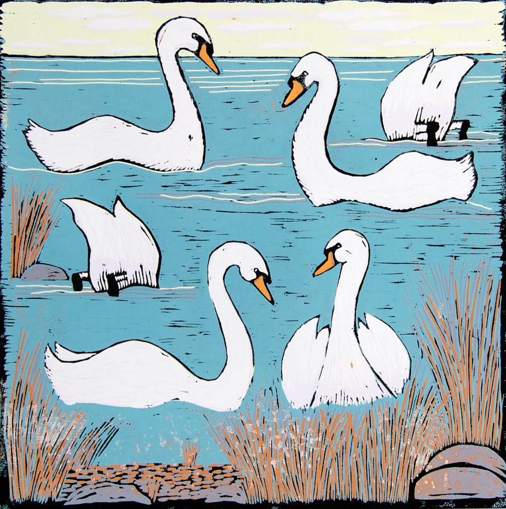 Swans Morning image