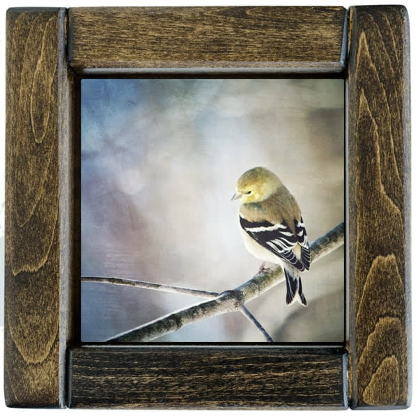 Goldfinch Framed