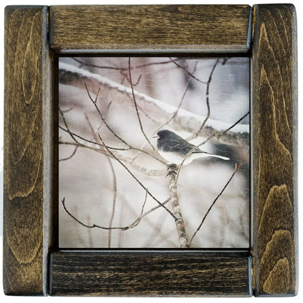 Junco Framed